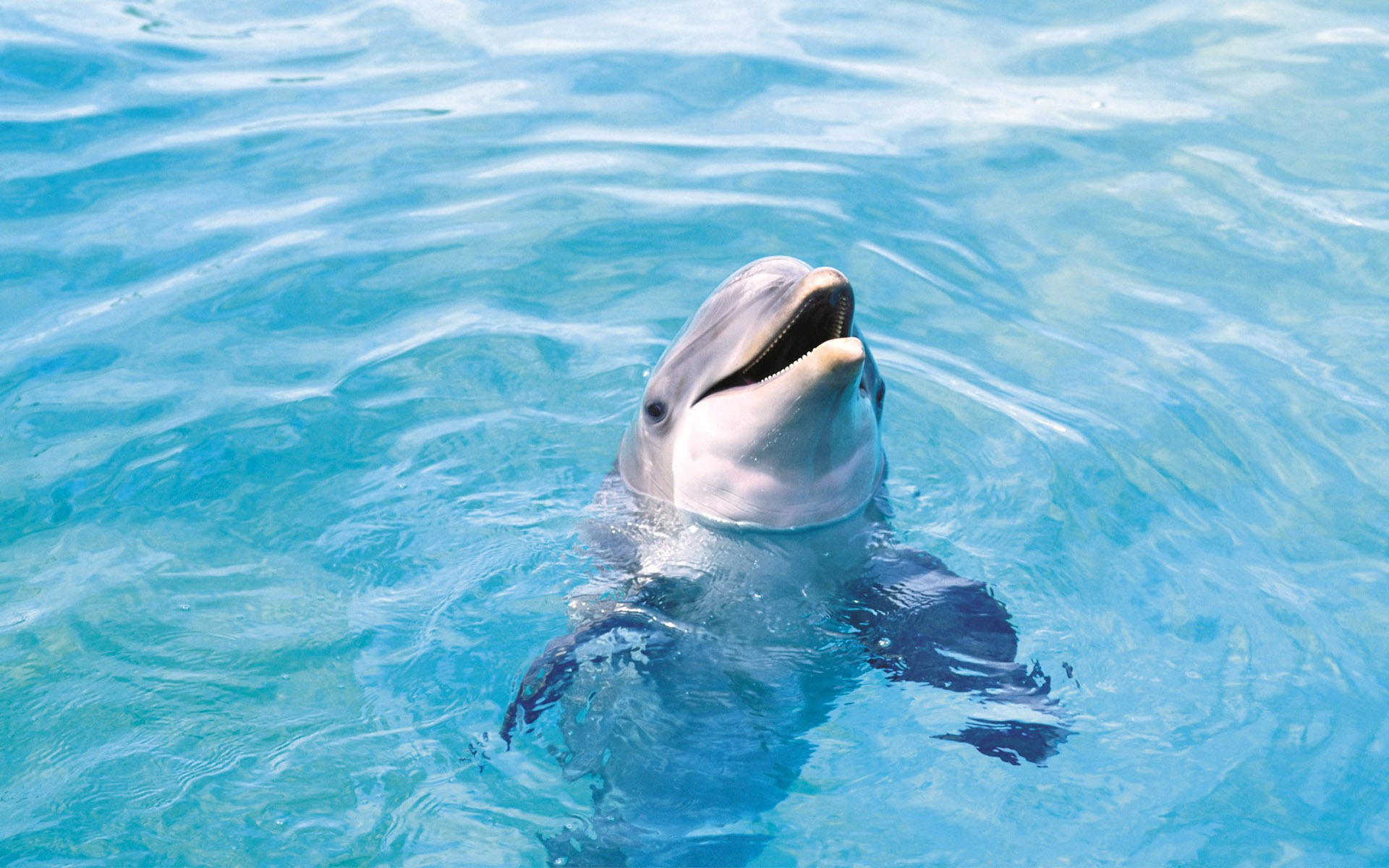 Dolphin Wallpaper Dolphins Animals Wallpapers in jpg format for ...