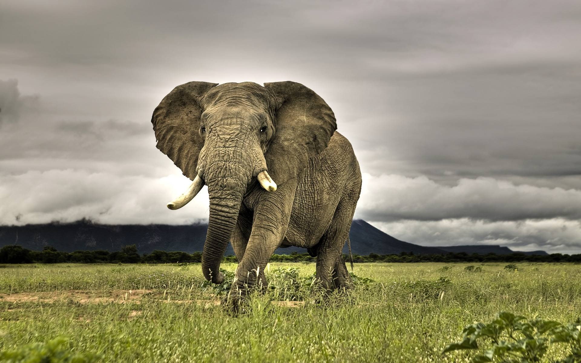 elephant wallpaper elephants animals wallpapers in jpg format for