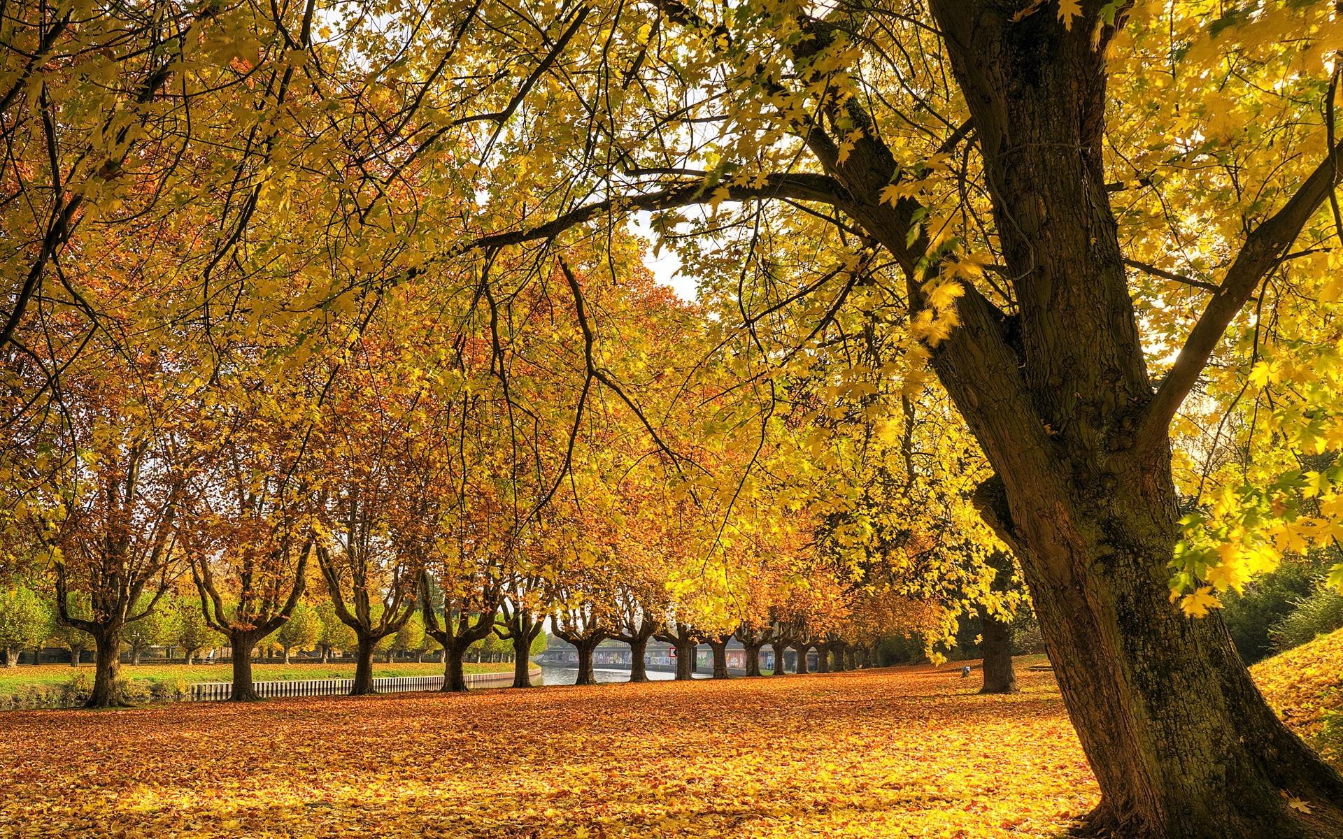 Golden Autumn Wallpaper Autumn Nature Wallpapers in jpg format for