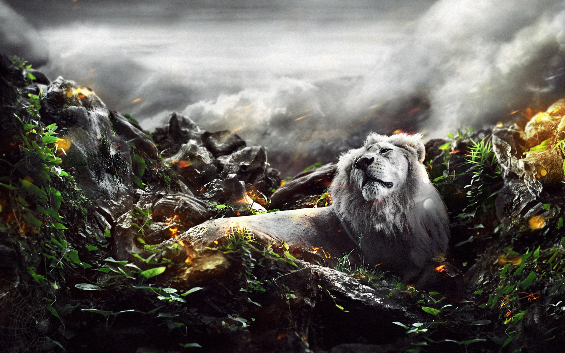 Jungle Lion Wallpapers In Jpg Format For Free Download