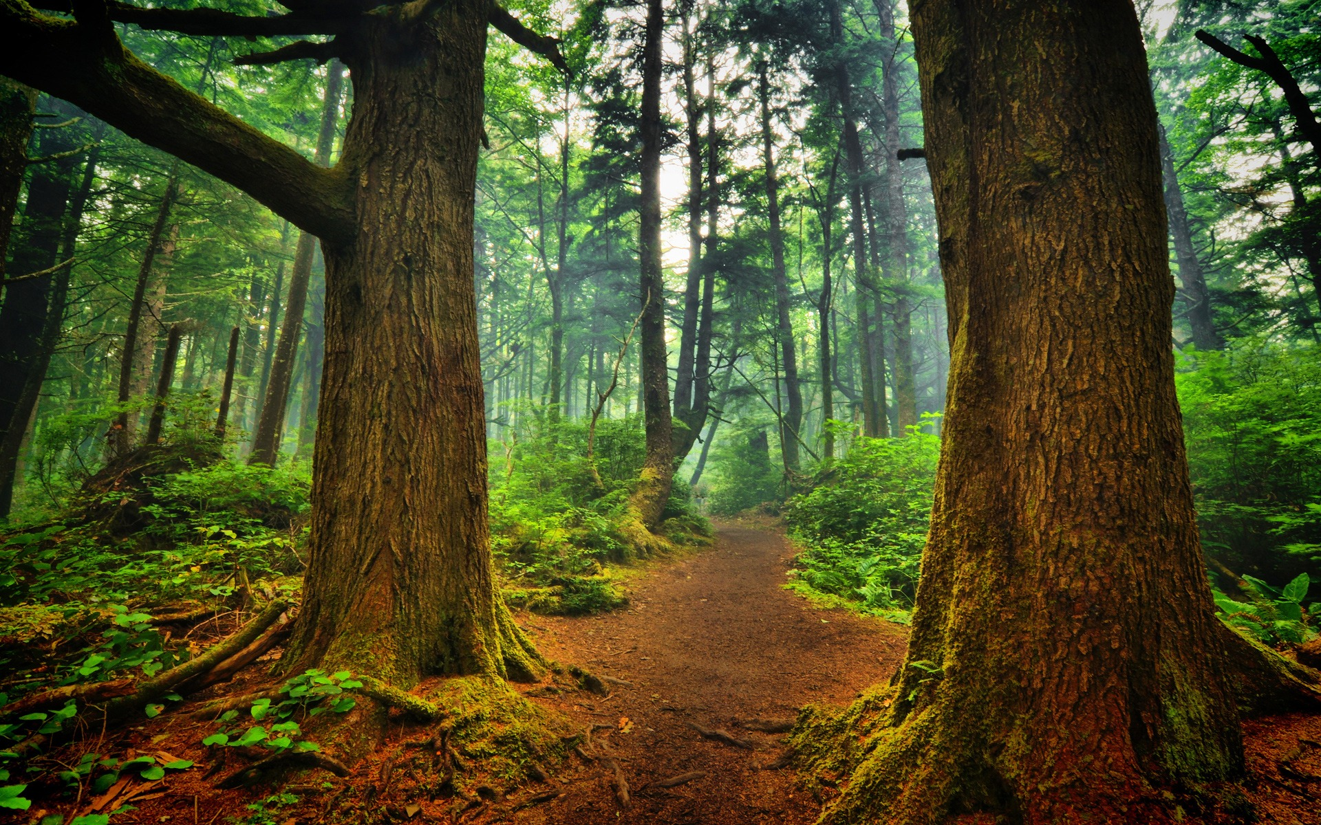 Forest Hd Nature Wallpaper