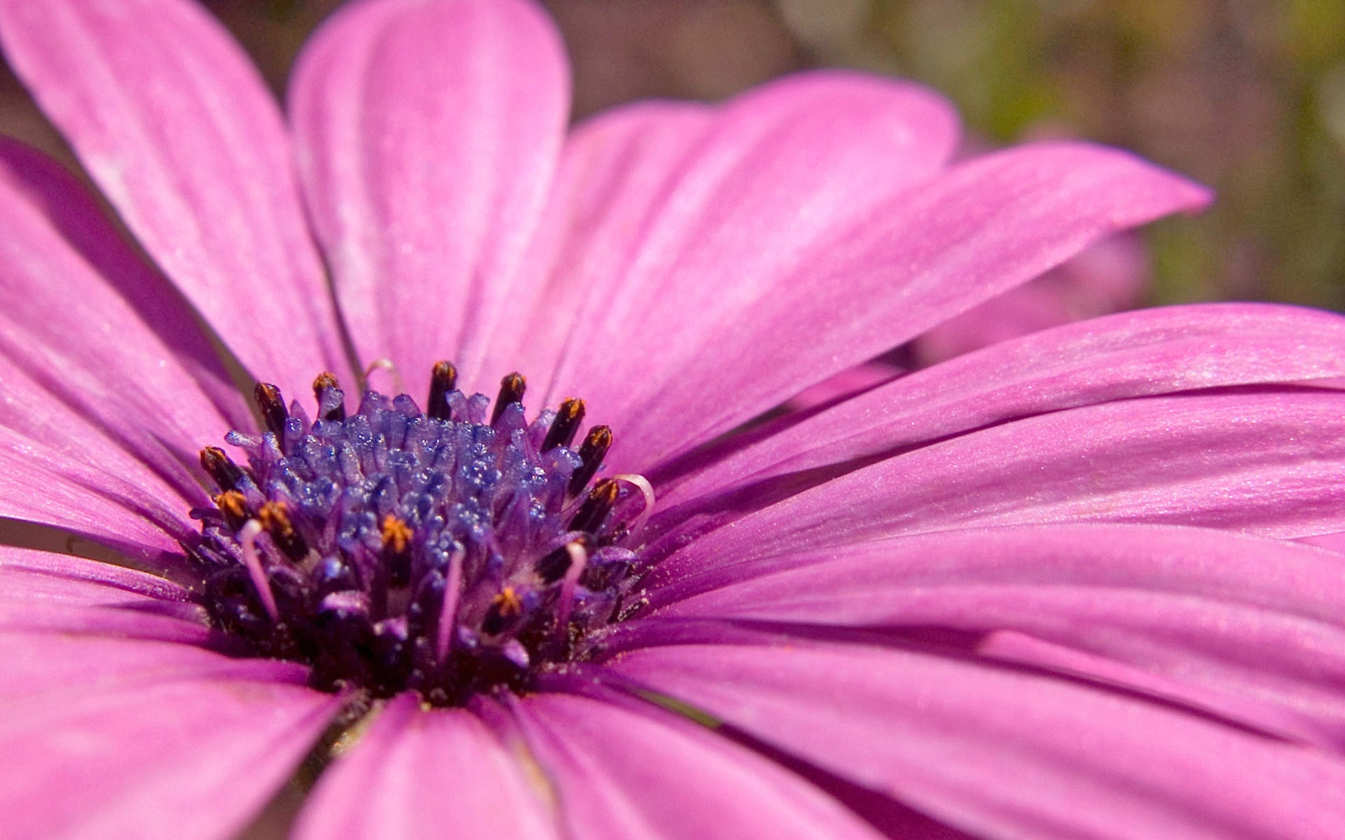 Pink flower wallpaper flowers nature wallpapers for free download pink flower hd wide dhlflorist Choice Image