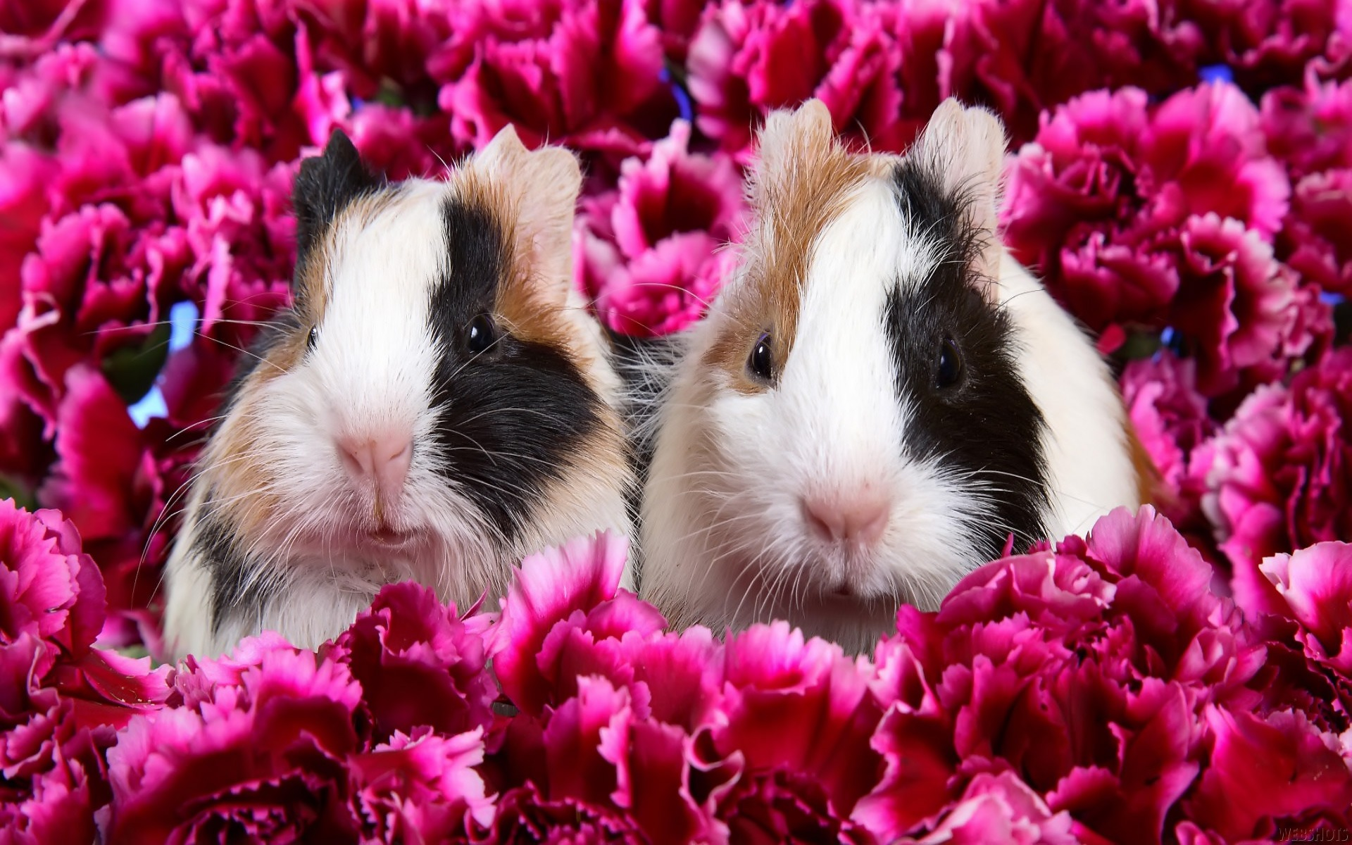 Wallpaper download all - Rabbits Wallpaper Other Animals Wallpapers
