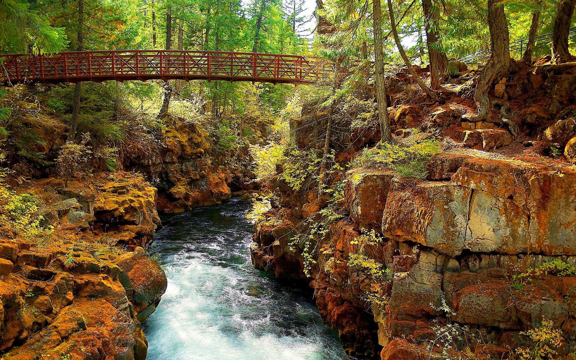 Forest river wallpaper rivers nature wallpapers for free download