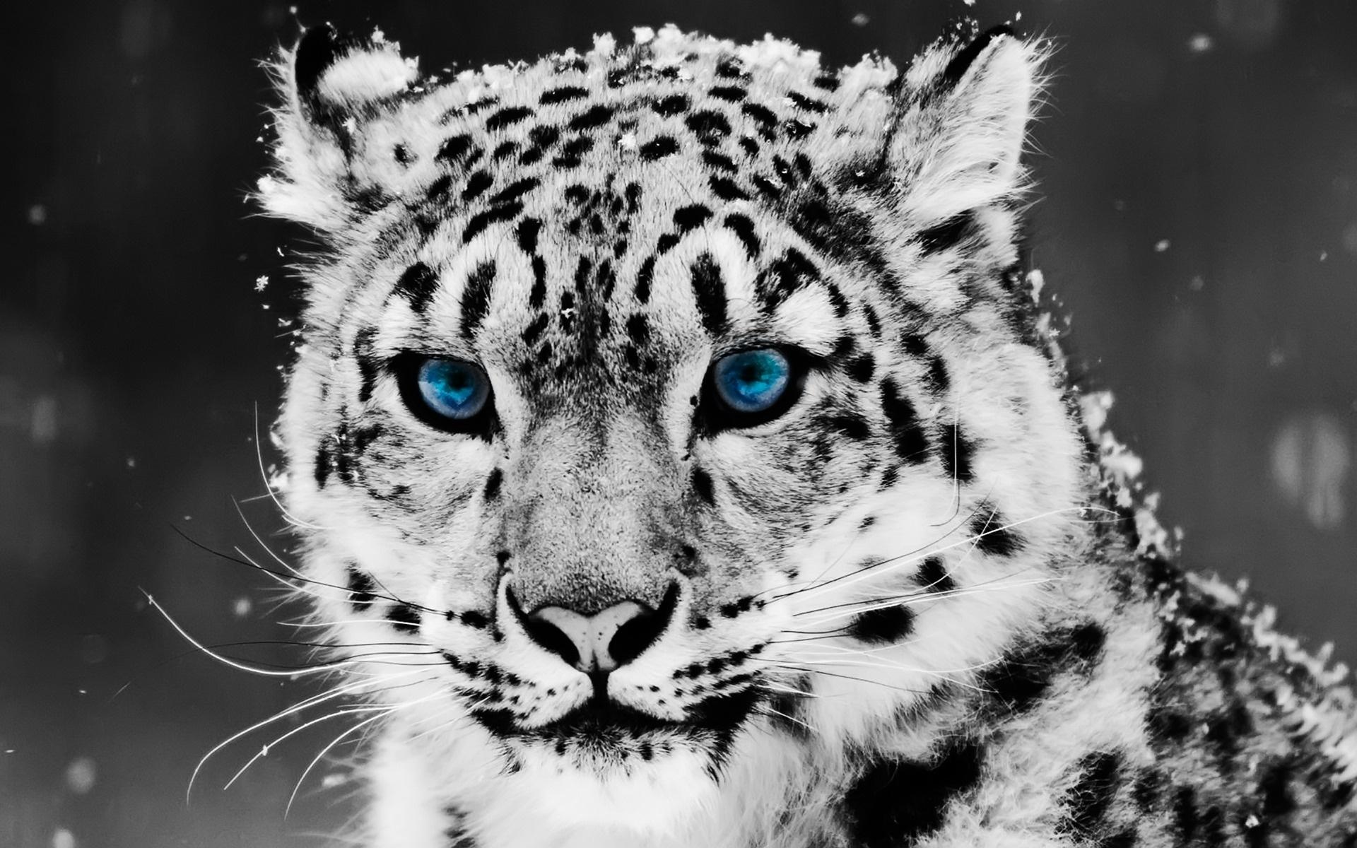 25  best ideas about Tiger wallpaper on Pinterest | Next wallpaper ...