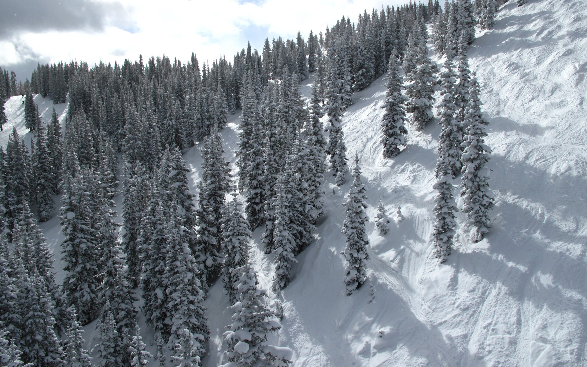 <b>Nature snowy mountain snow</b> flower <b>wallpaper</b>   1920x1200   684813 ...