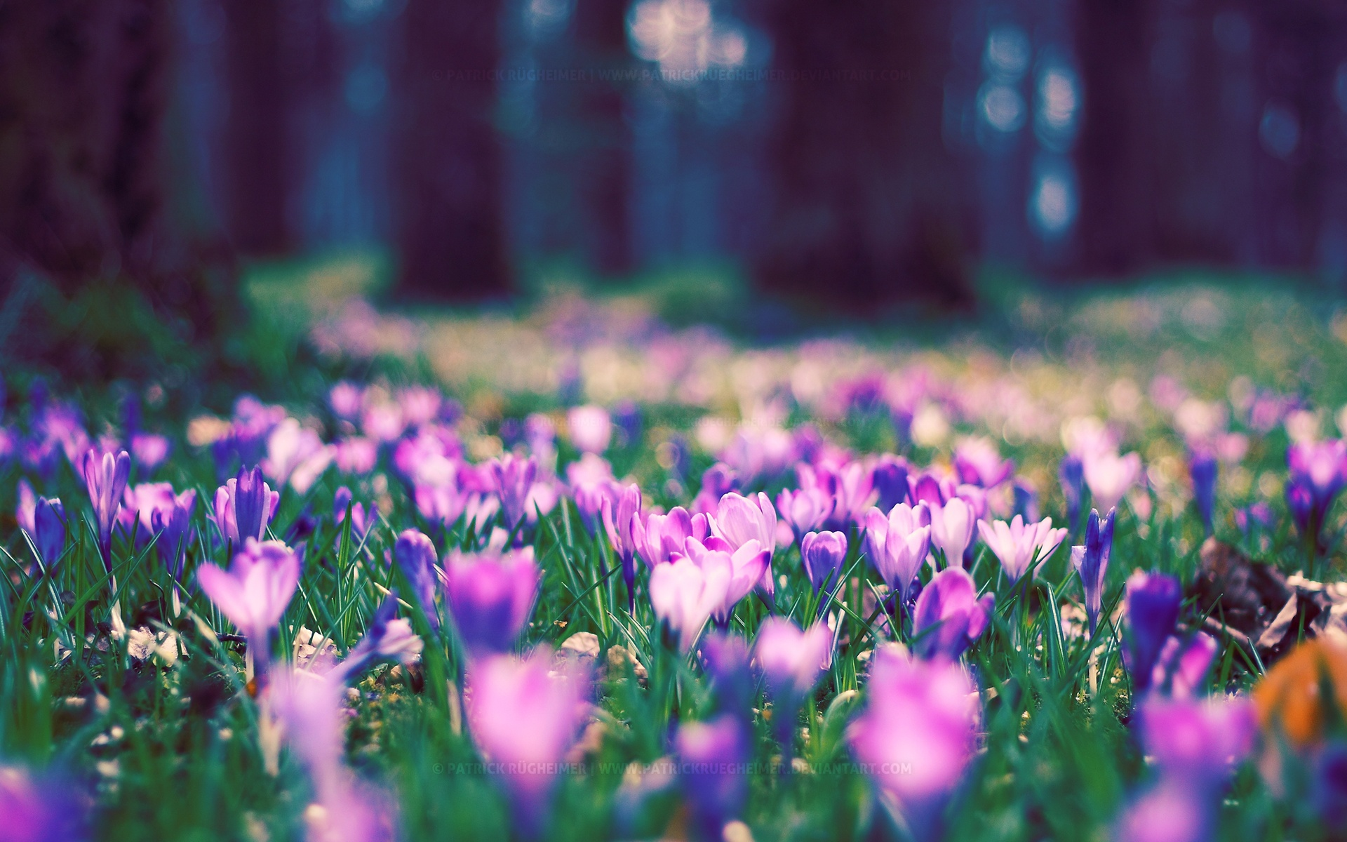 Spring Flower Park Wallpapers In Jpg Format For Free Download