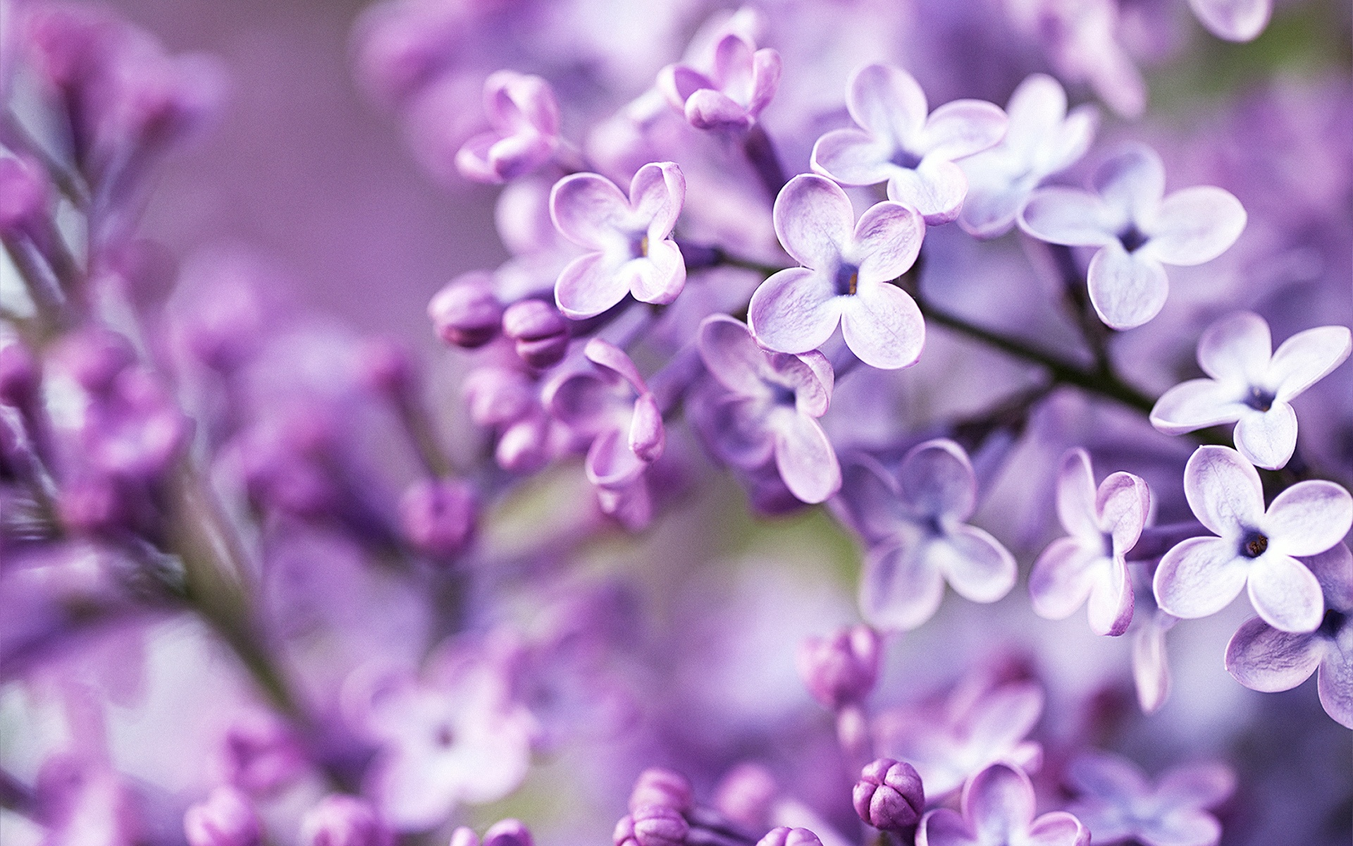 purple flowers wallpaper nature wallpapers for free download about, Natural flower