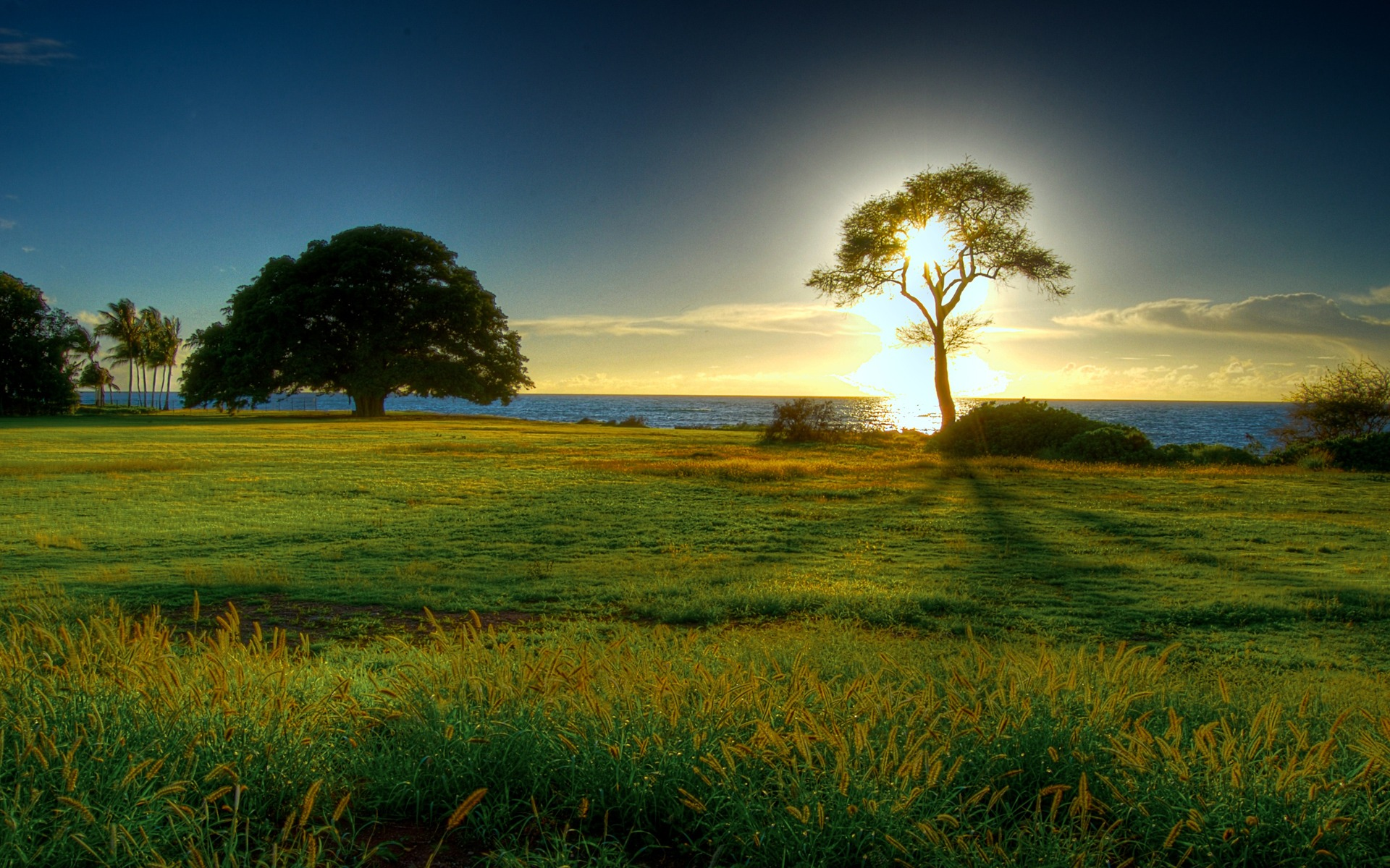 Tree Of Light Wallpaper Landscape Nature Wallpapers