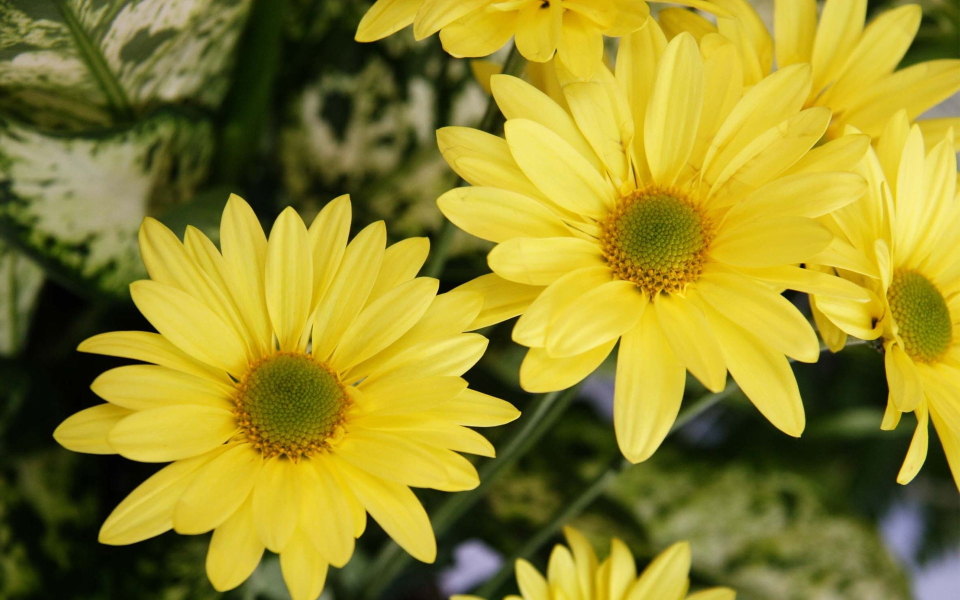 Yellow color flowers wallpapers in jpg format for free download 19201200 mightylinksfo