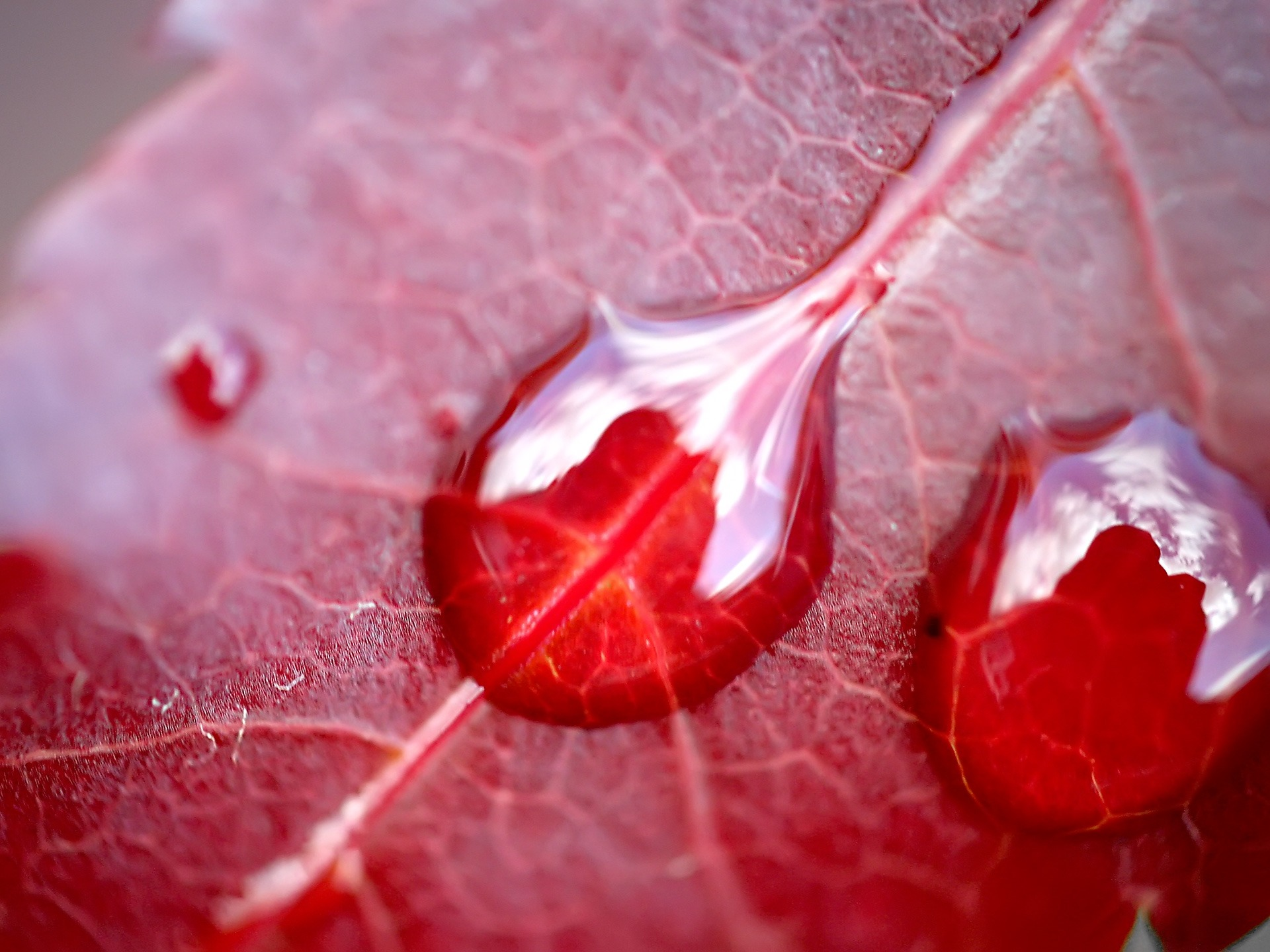 drops of water on leaf wallpaper autumn nature wallpapers in jpg