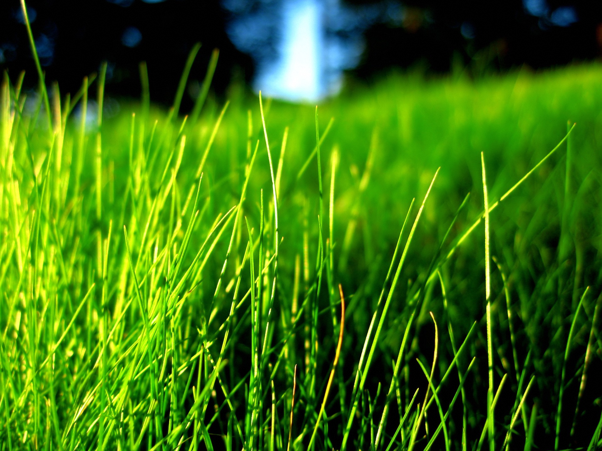 Wallpaper download in nature - Grass Wallpaper Plants Nature