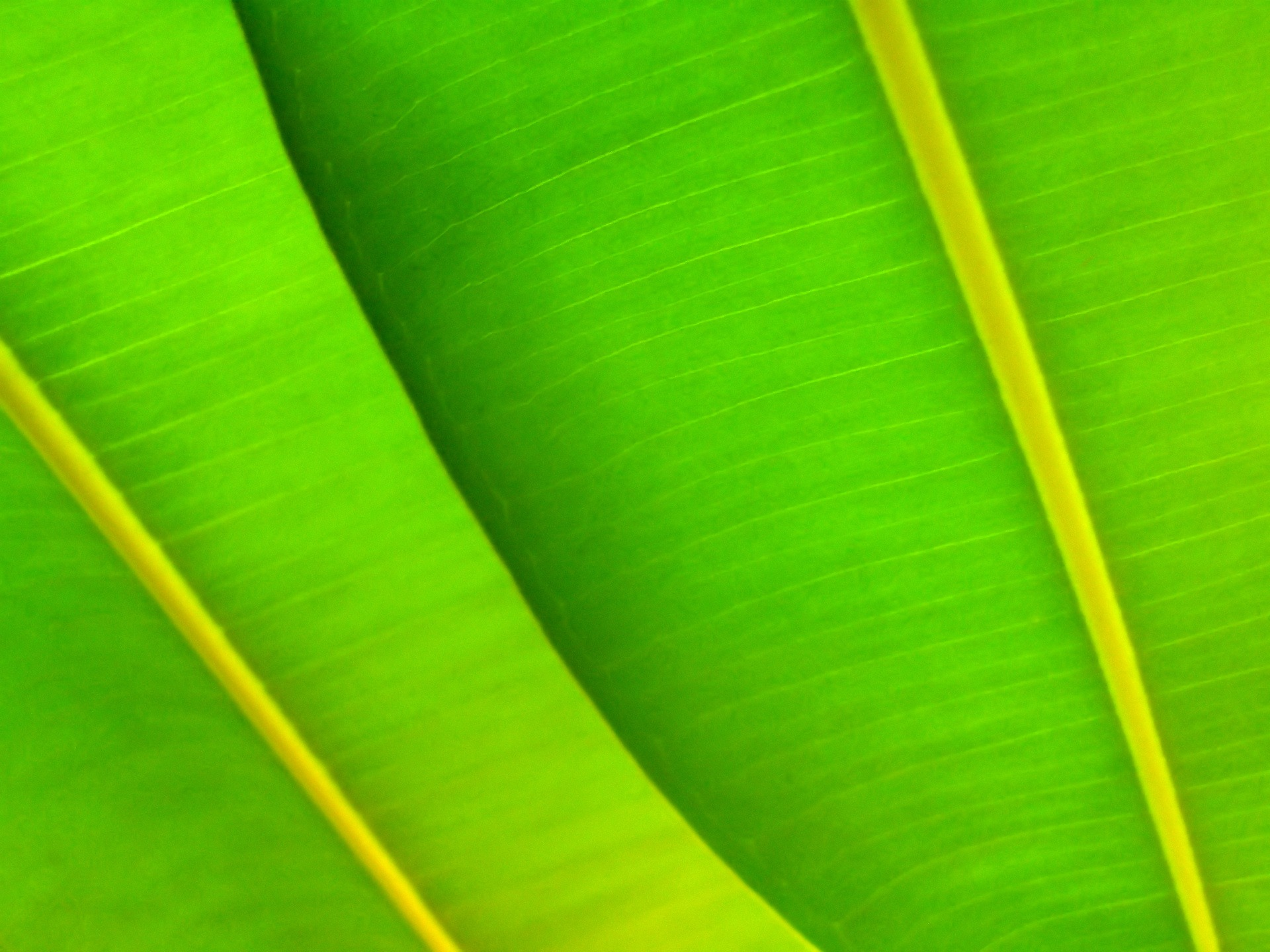Green leafs Wallpaper Plants Nature Wallpapers in jpg format for