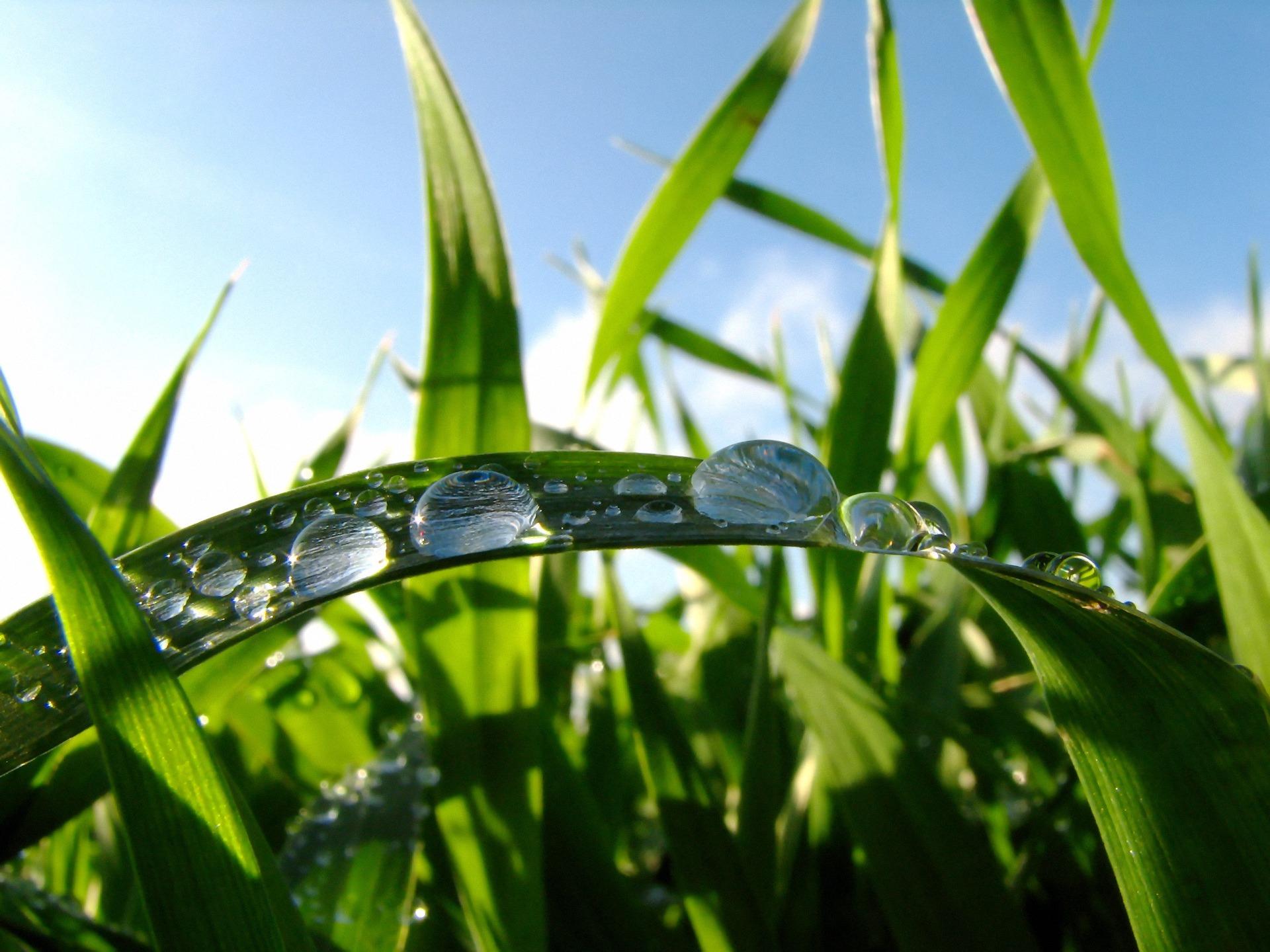 Výsledek obrázku pro grass in the morning