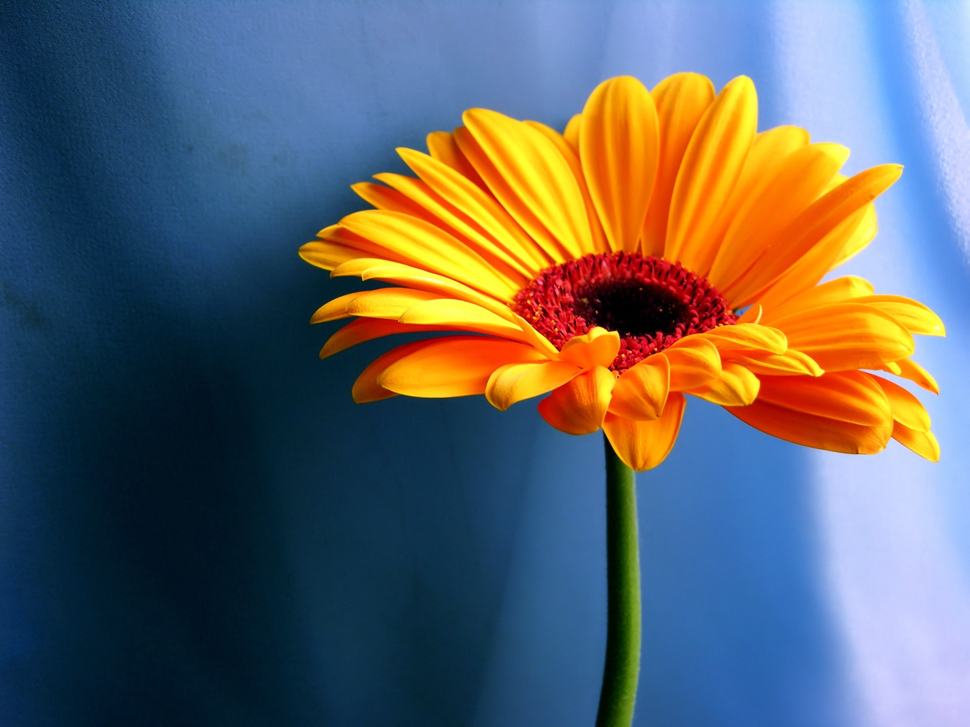 Orange flower wallpaper flowers nature wallpapers in jpg format orange flower wallpaper flowers nature wallpapers voltagebd Gallery