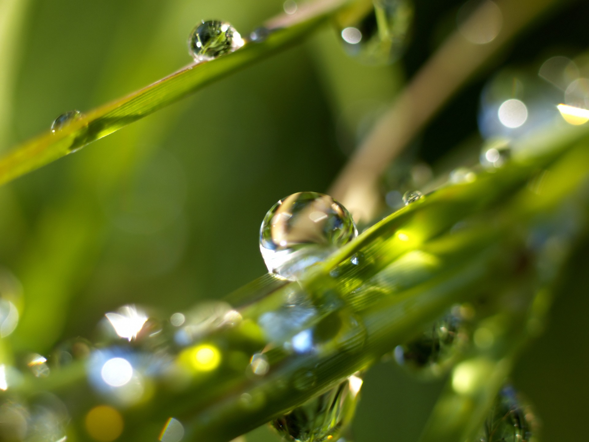 Image result for dew drops wallpaper hd