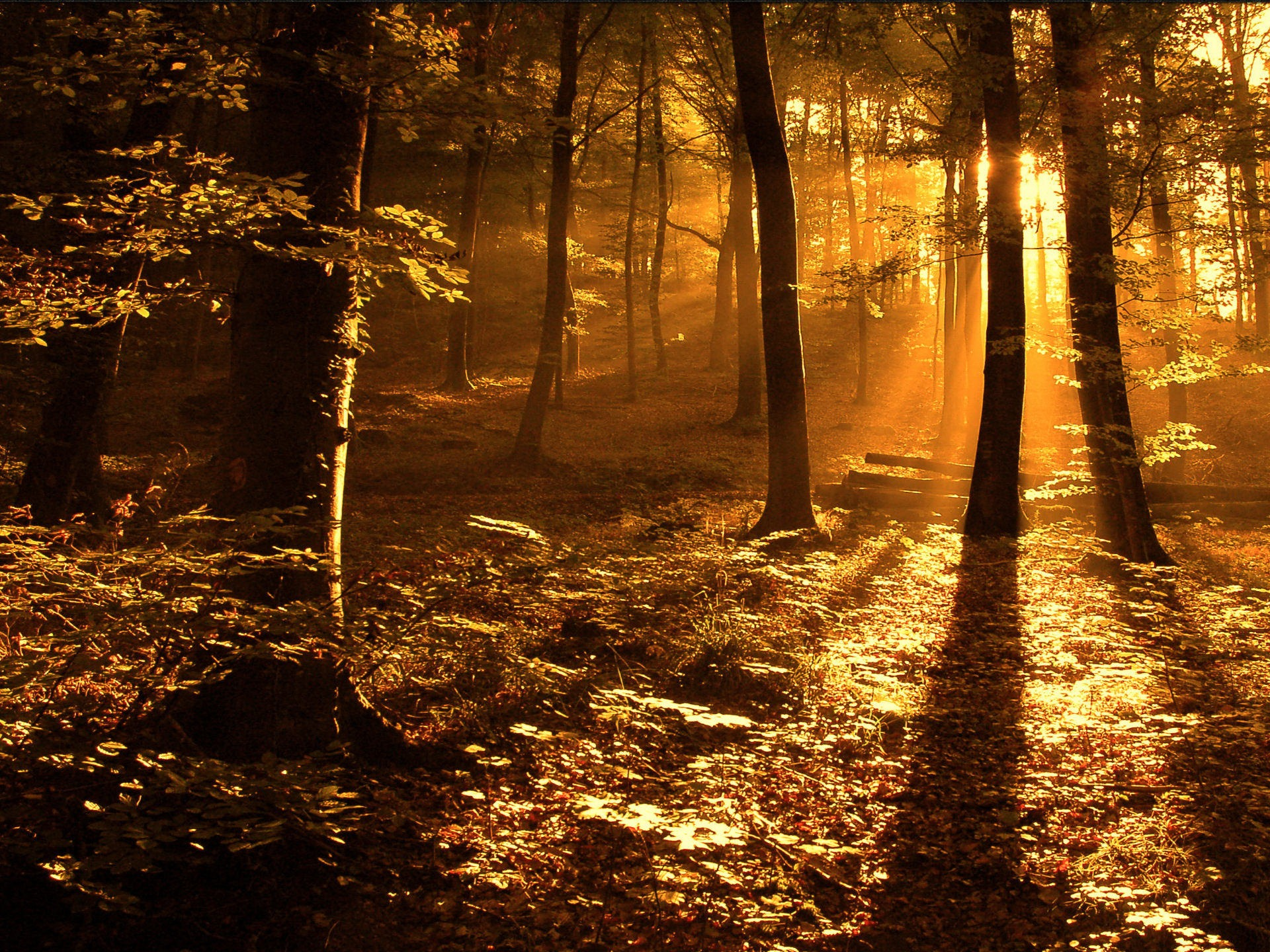 sun ray in the woods wallpaper landscape nature wallpapers in jpg