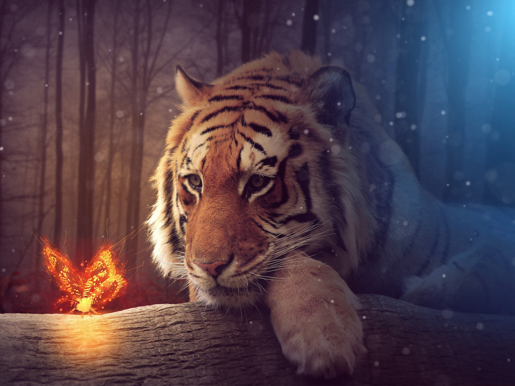 big tiger wallpapers in jpg format for free download