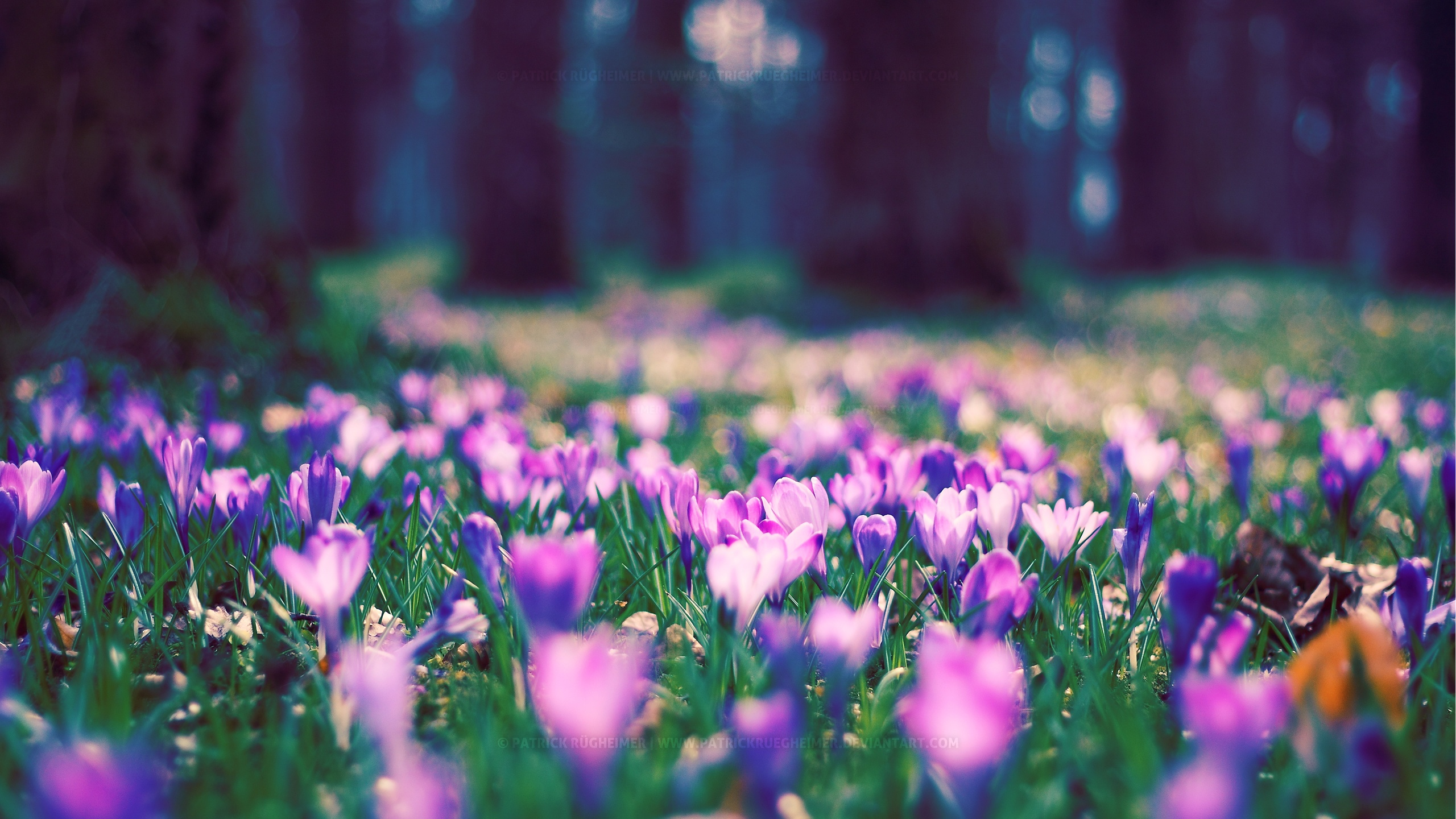 Spring flower park wallpapers in jpg format for free download spring flower park wallpapers mightylinksfo