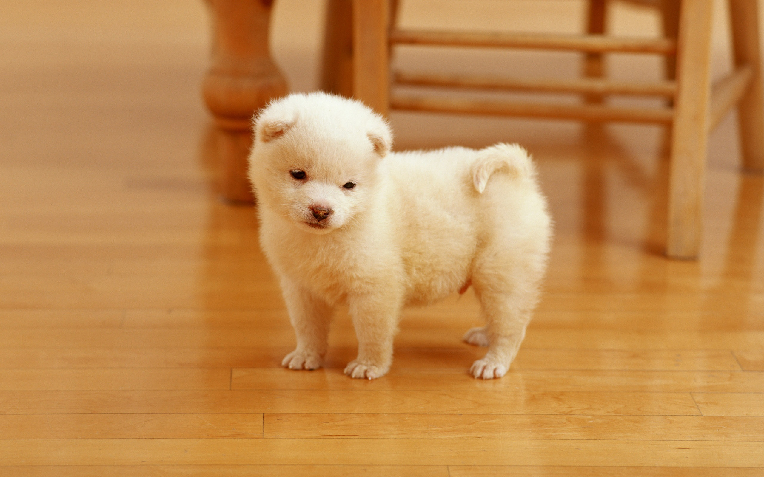 Cutest Puppy Wallpapers in format for free