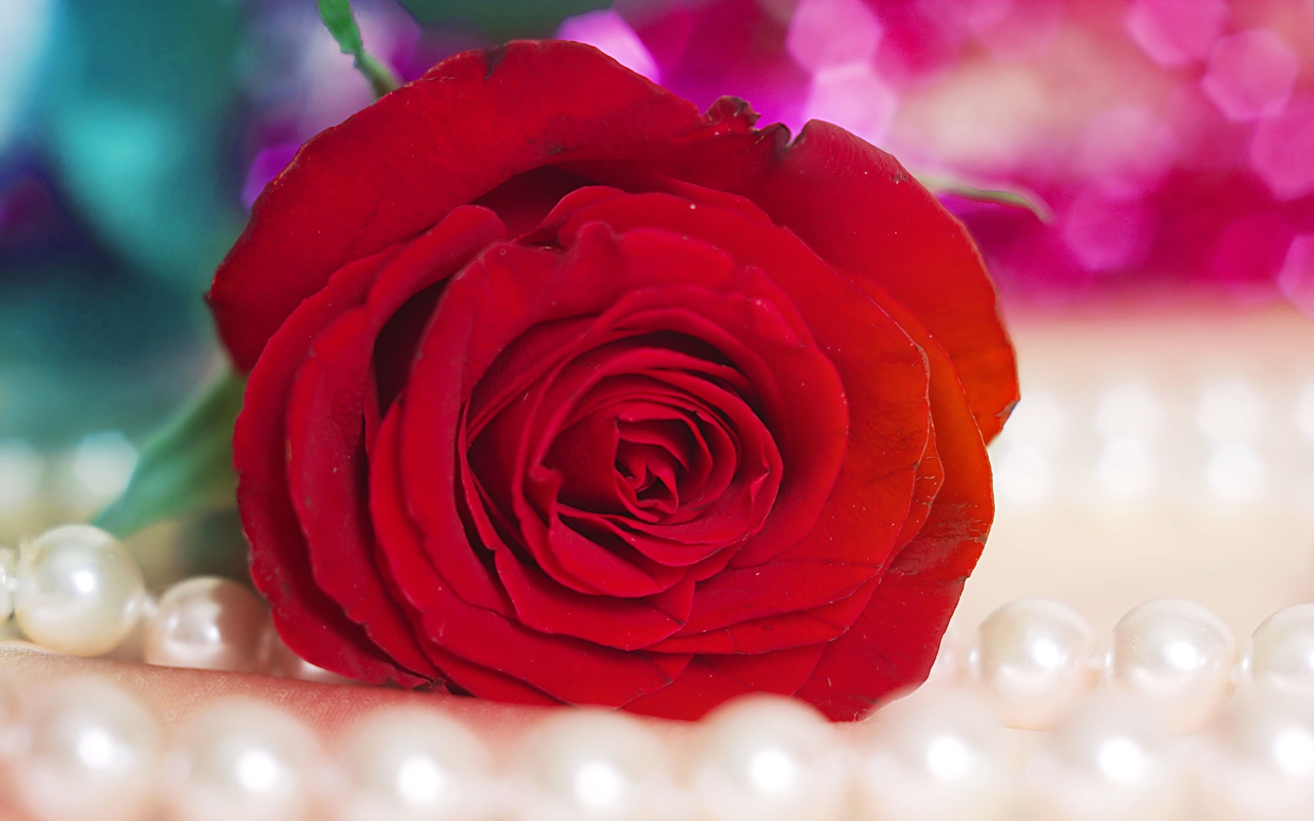 Red roses wallpaper - Red Rose 5