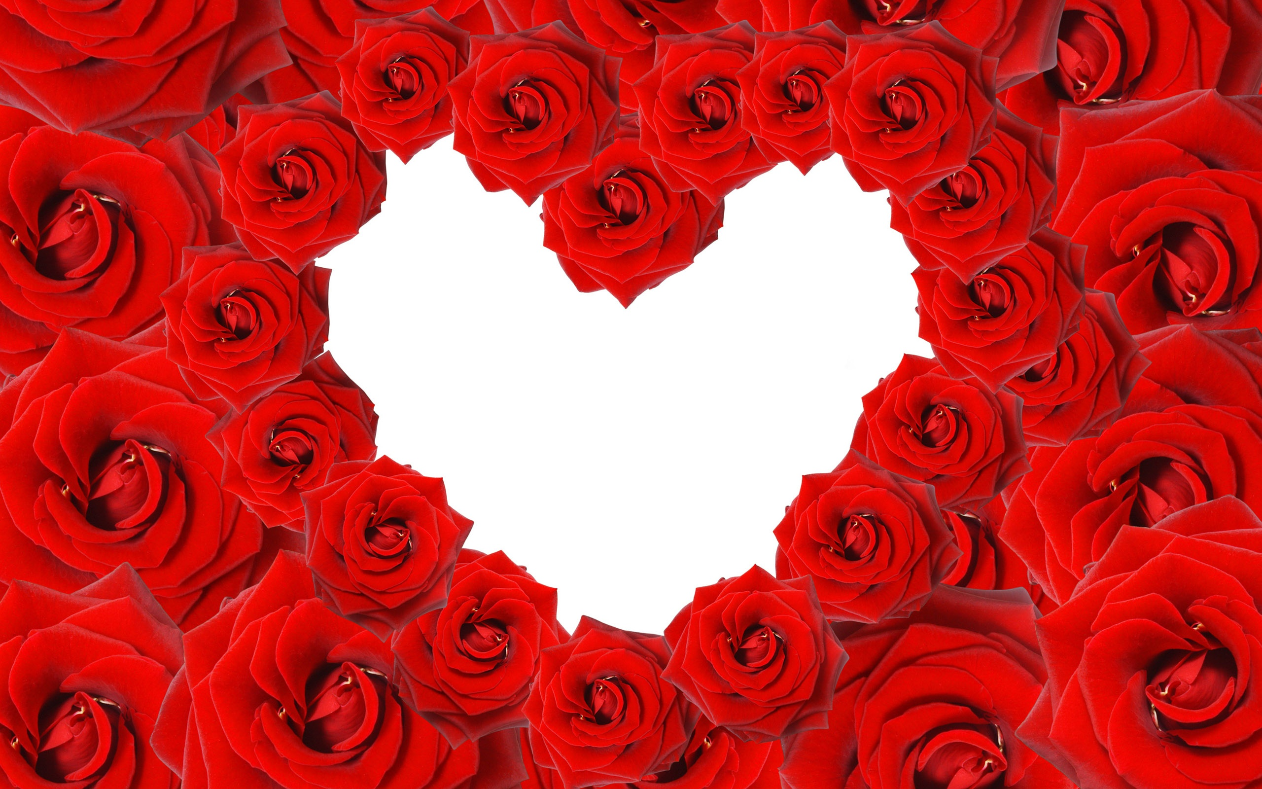 Red Roses Love Heart