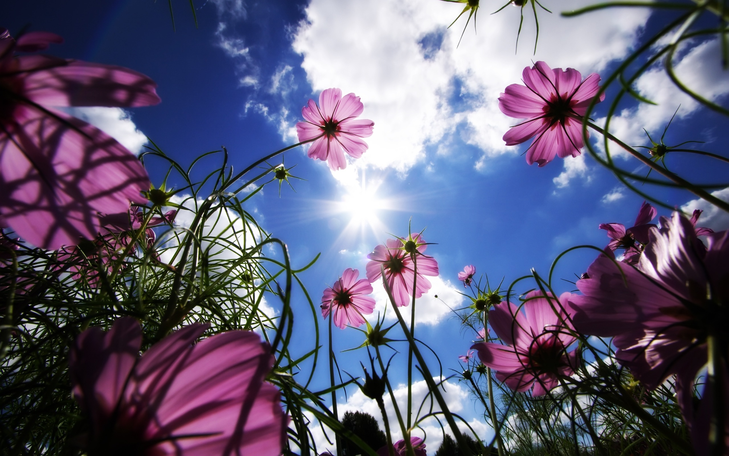 Sunny Flowers Wallpaper Nature Wallpapers In Jpg Format For