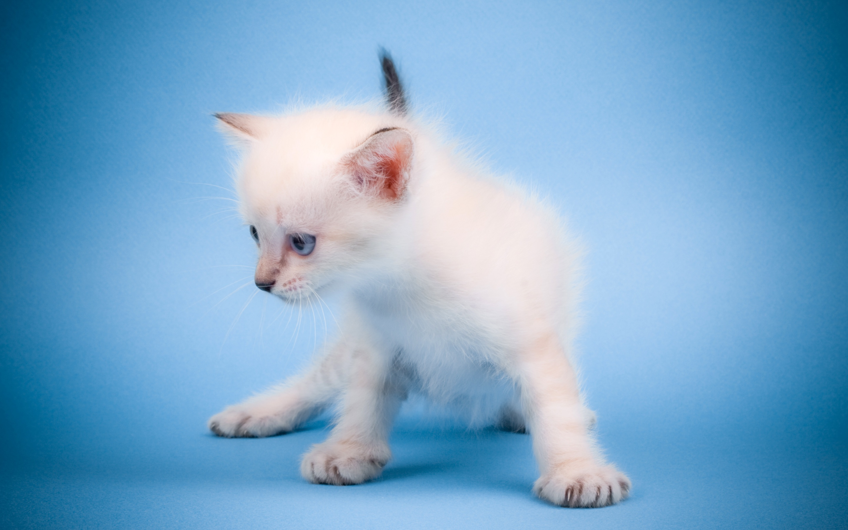 cute kitty wallpaper cats animals wallpapers for free download