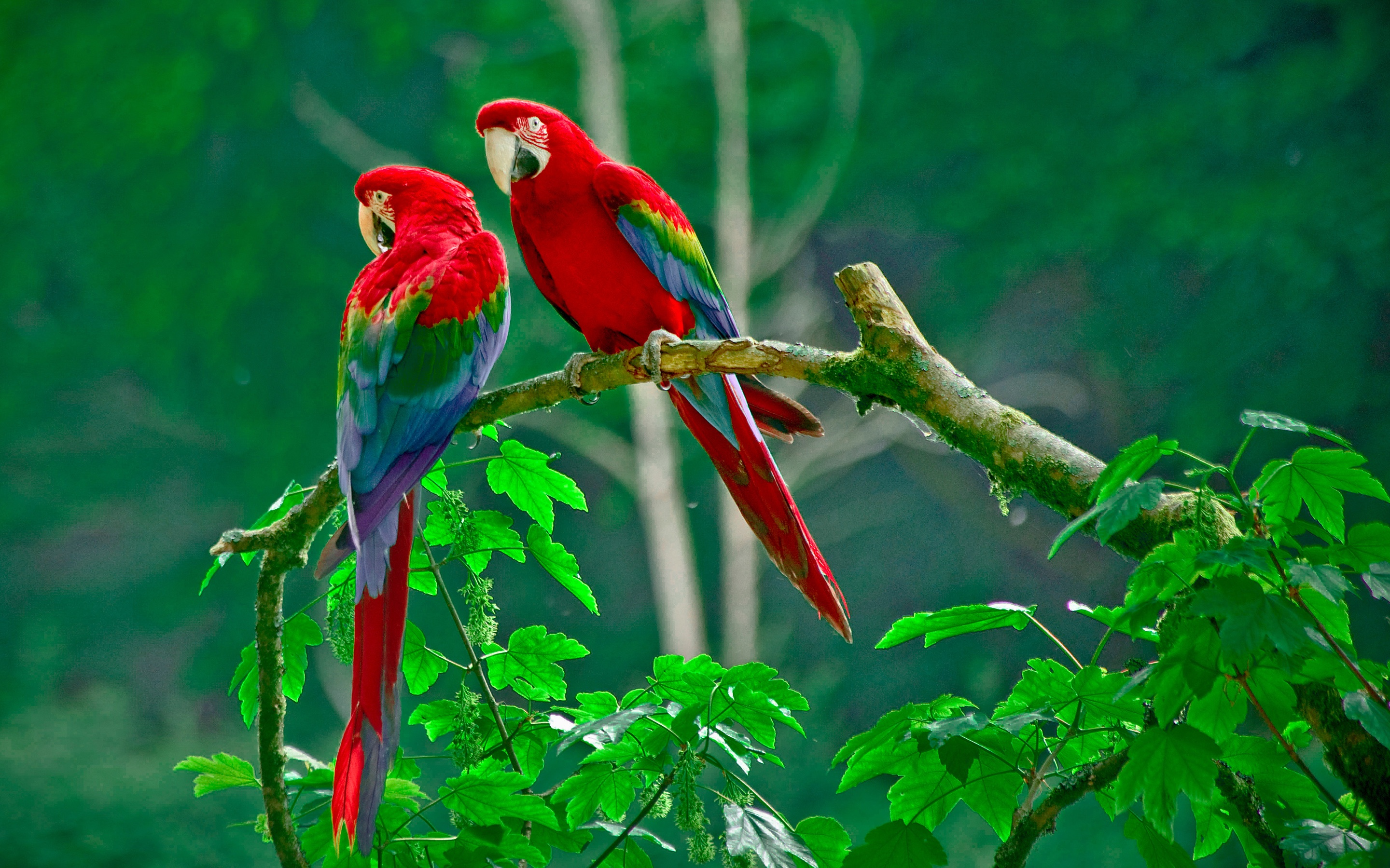 Macaw Parrot Wallpapers Wallpaper