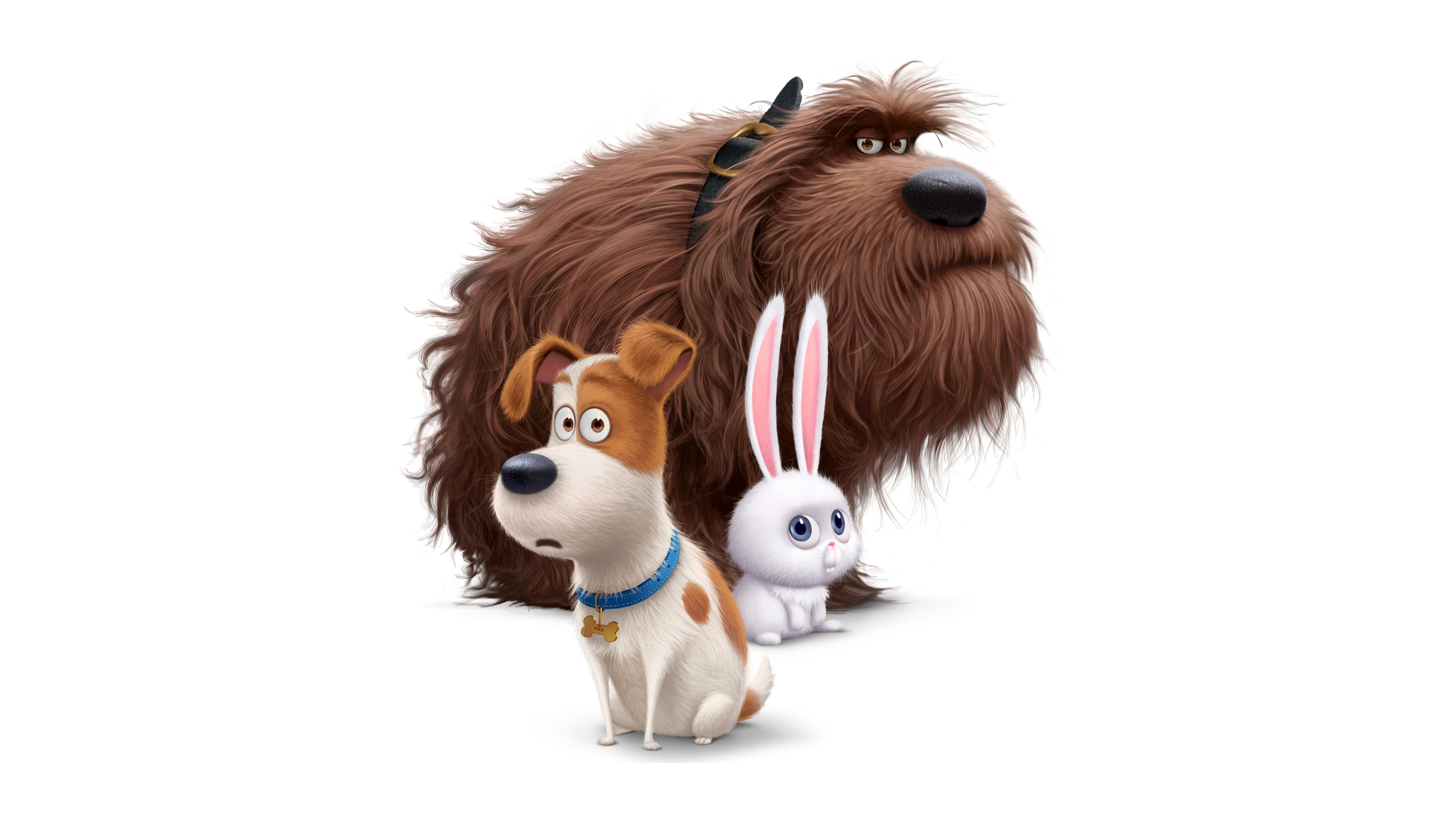 The Secret Life Of Pets 4k 8k Wallpapers In Jpg Format For Free Download