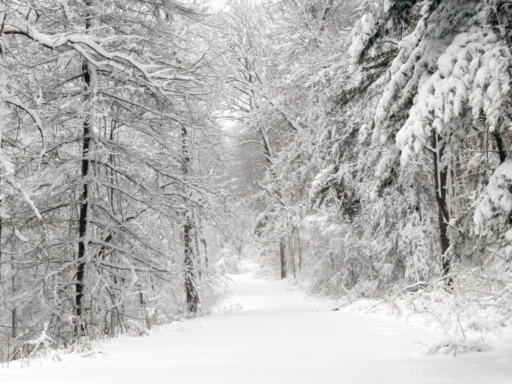 snow path wallpapers - photo #3