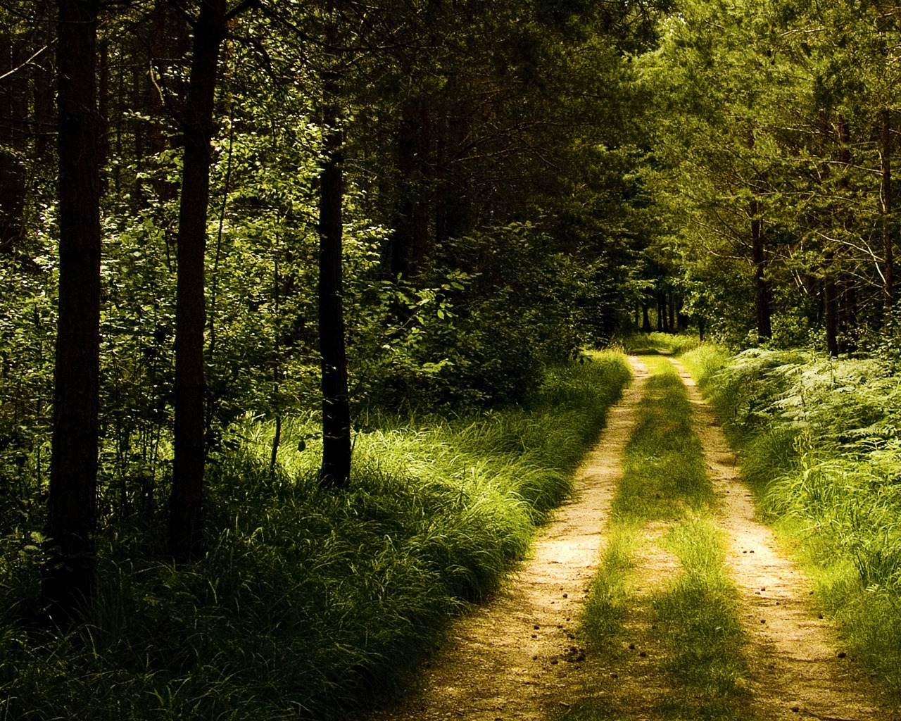 Germany Forest Road Wallpaper Landscape Nature Wallpapers ...