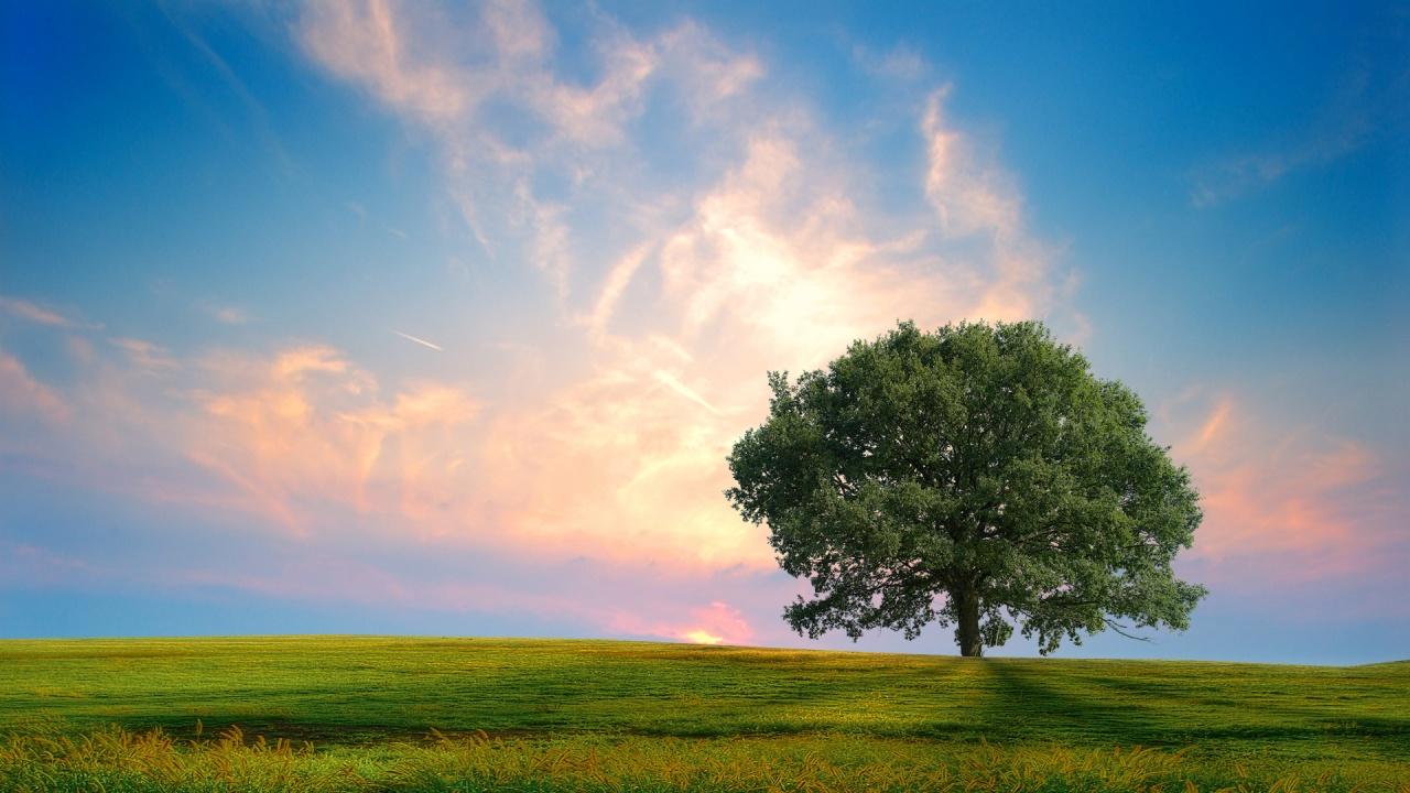 Fresh Nature Wallpaper...