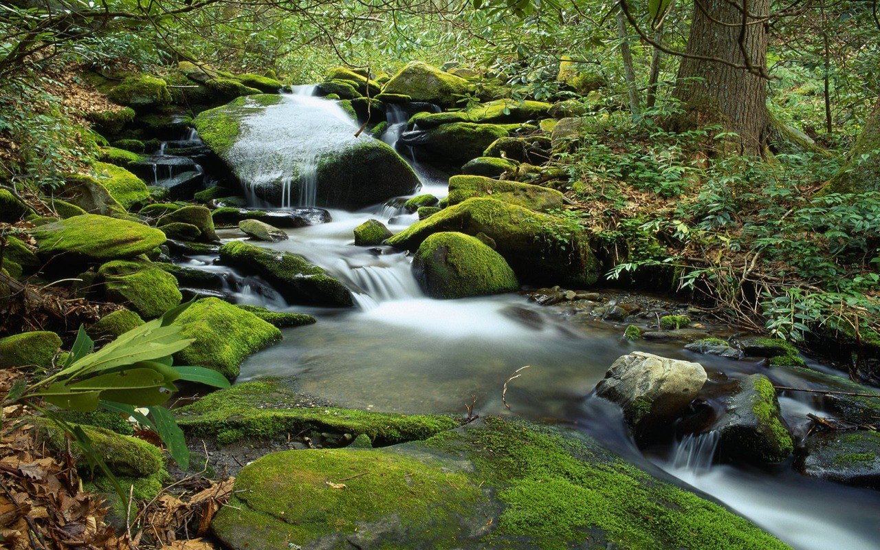 Forest waterfall wallpaper rivers nature wallpapers in jpg - Waterfalls desktop wallpaper forest falls ...
