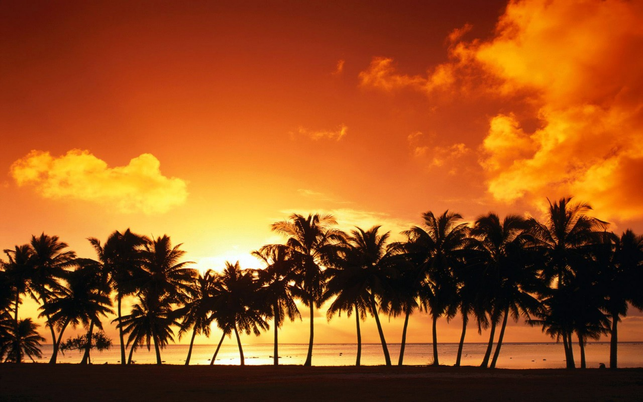 palm tree sunset wallpaper landscape nature wallpapers in
