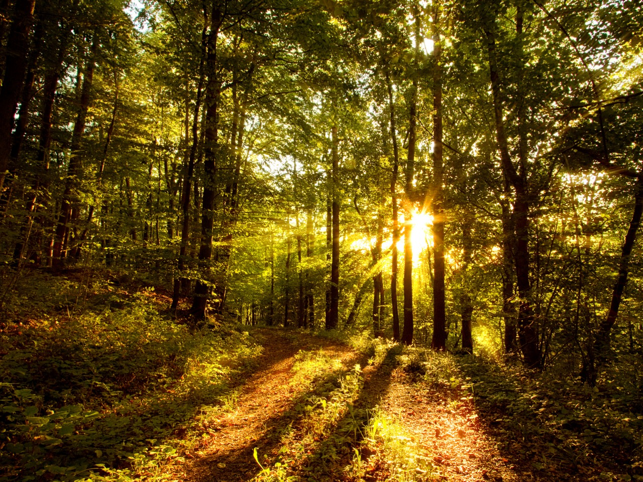 Forest Sun Wallpaper Landscape Nature Wallpapers In Jpg