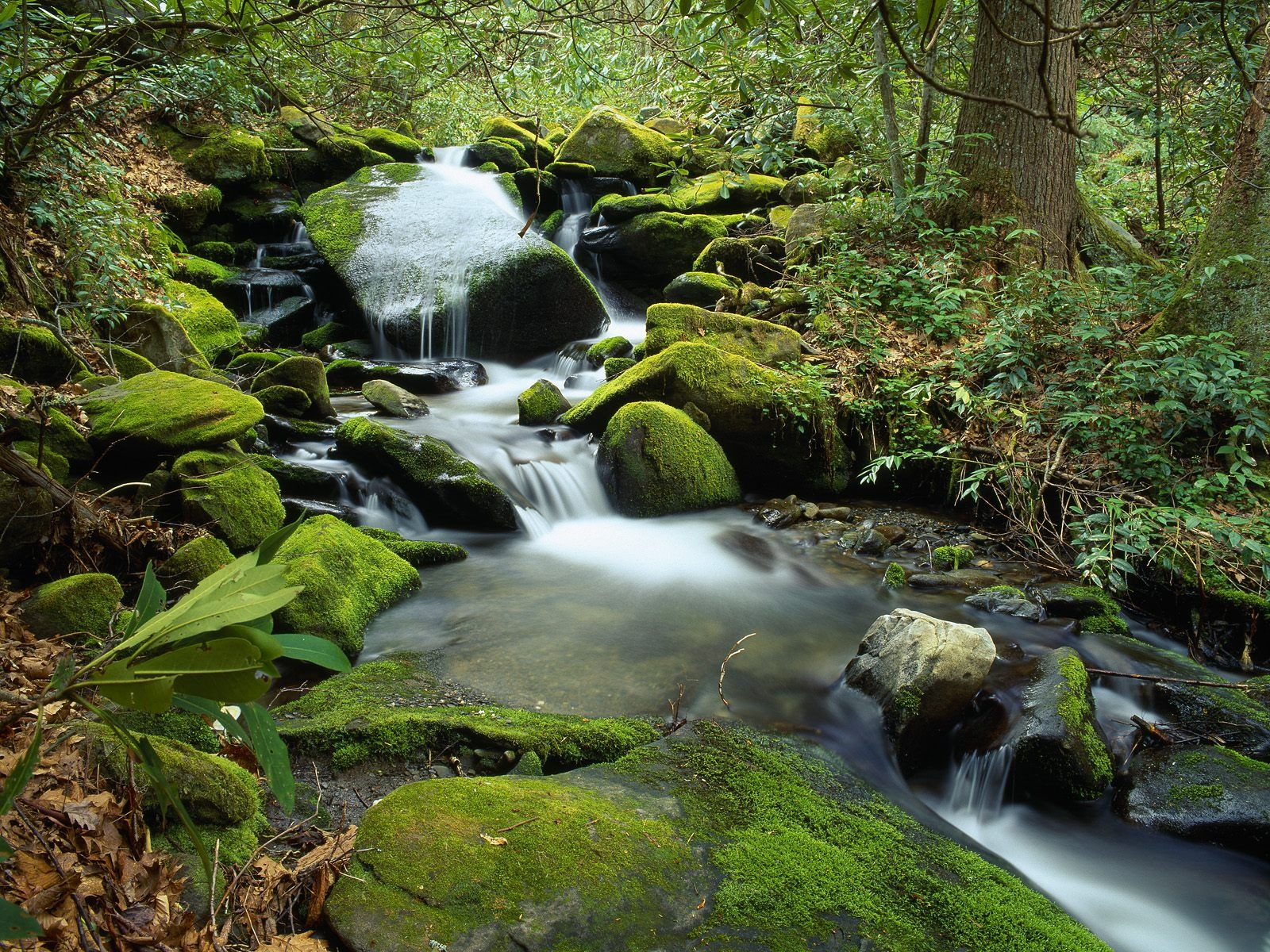 Forest Waterfall Wallpaper Rivers Nature Wallpapers In Jpg