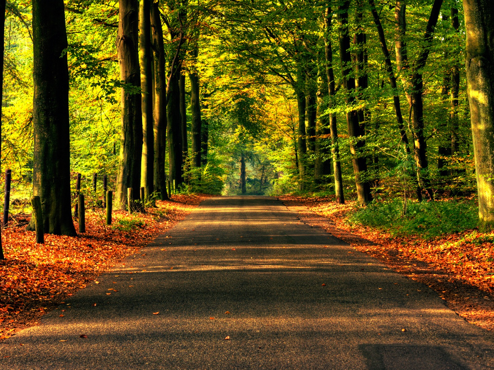 road to autumn wallpaper autumn nature wallpapers in jpg