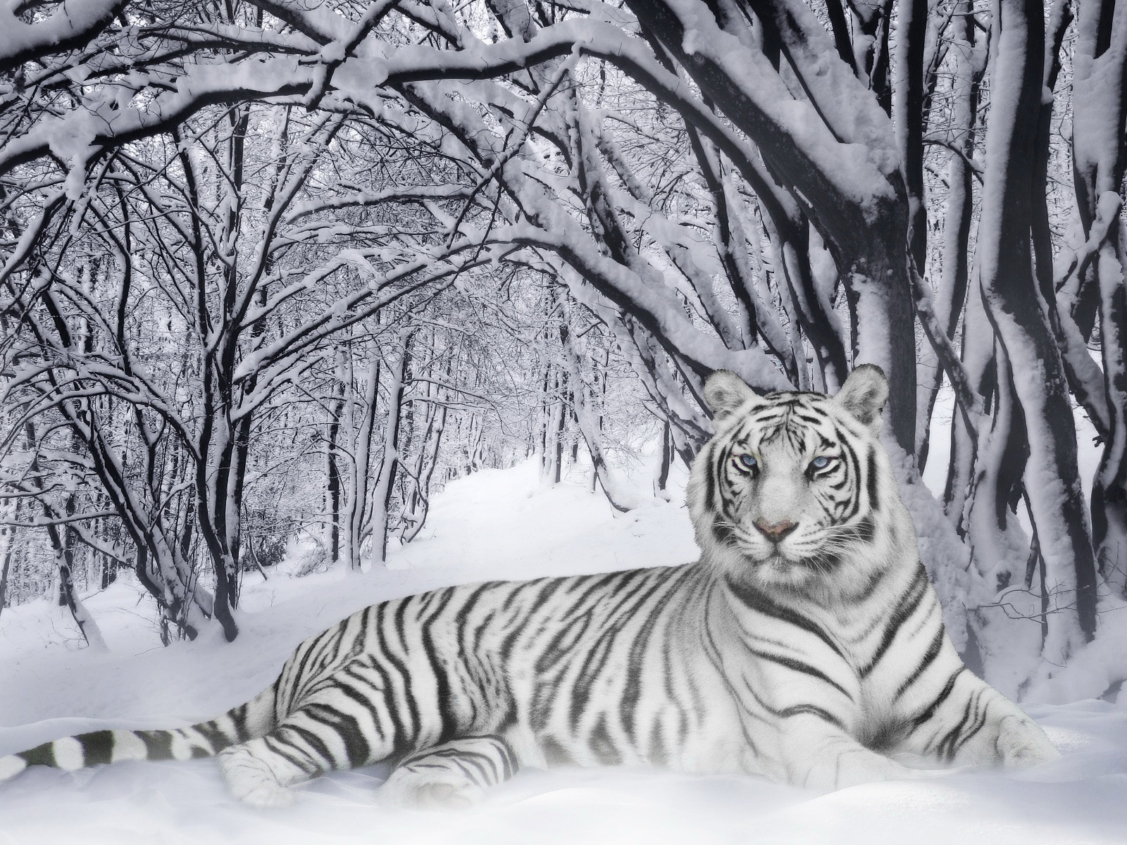 White tiger wallpaper tigers animals wallpaper 385 further Pills Capsules Backgrounds together with Bolek And Lolek Symphony 17976 75 besides Golden Opportunity Backgrounds together with Santa Animated Cliparts. on 3d animated cartoons