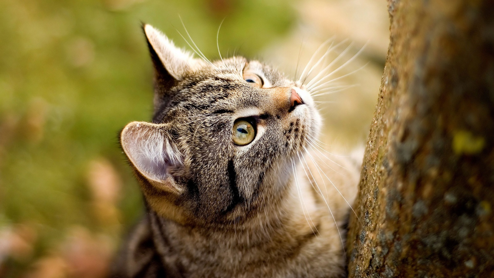 Cat staring up wallpapers in jpg format for free download - Free wallpaper of kittens ...