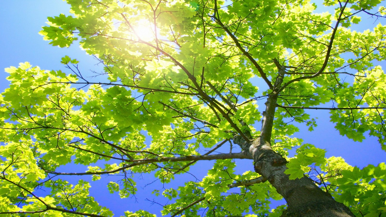 sunny tree branches wallpaper plants nature wallpapers in jpg format for free download