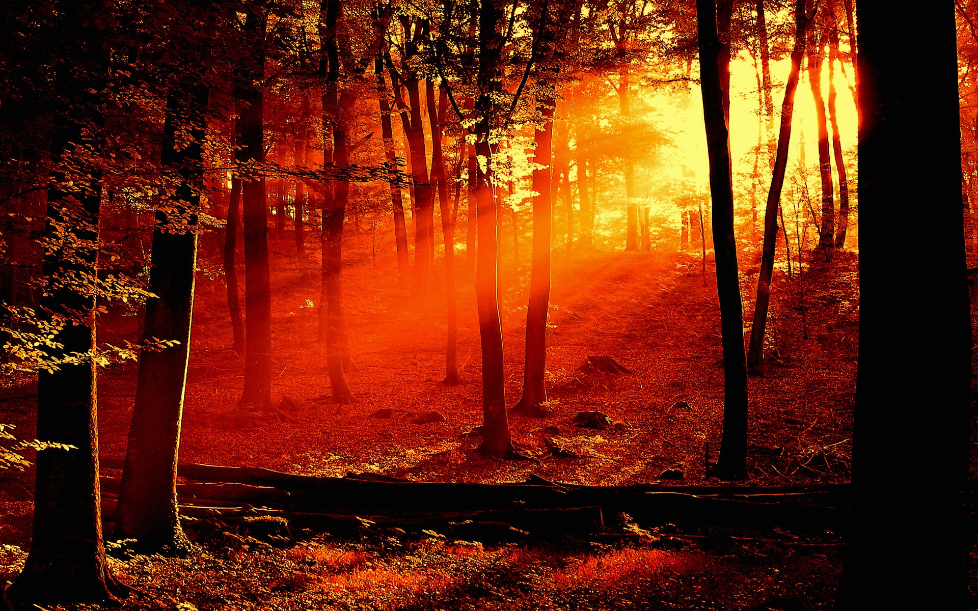 Forest Sunrise Wallpaper Landscape Nature Wallpapers In
