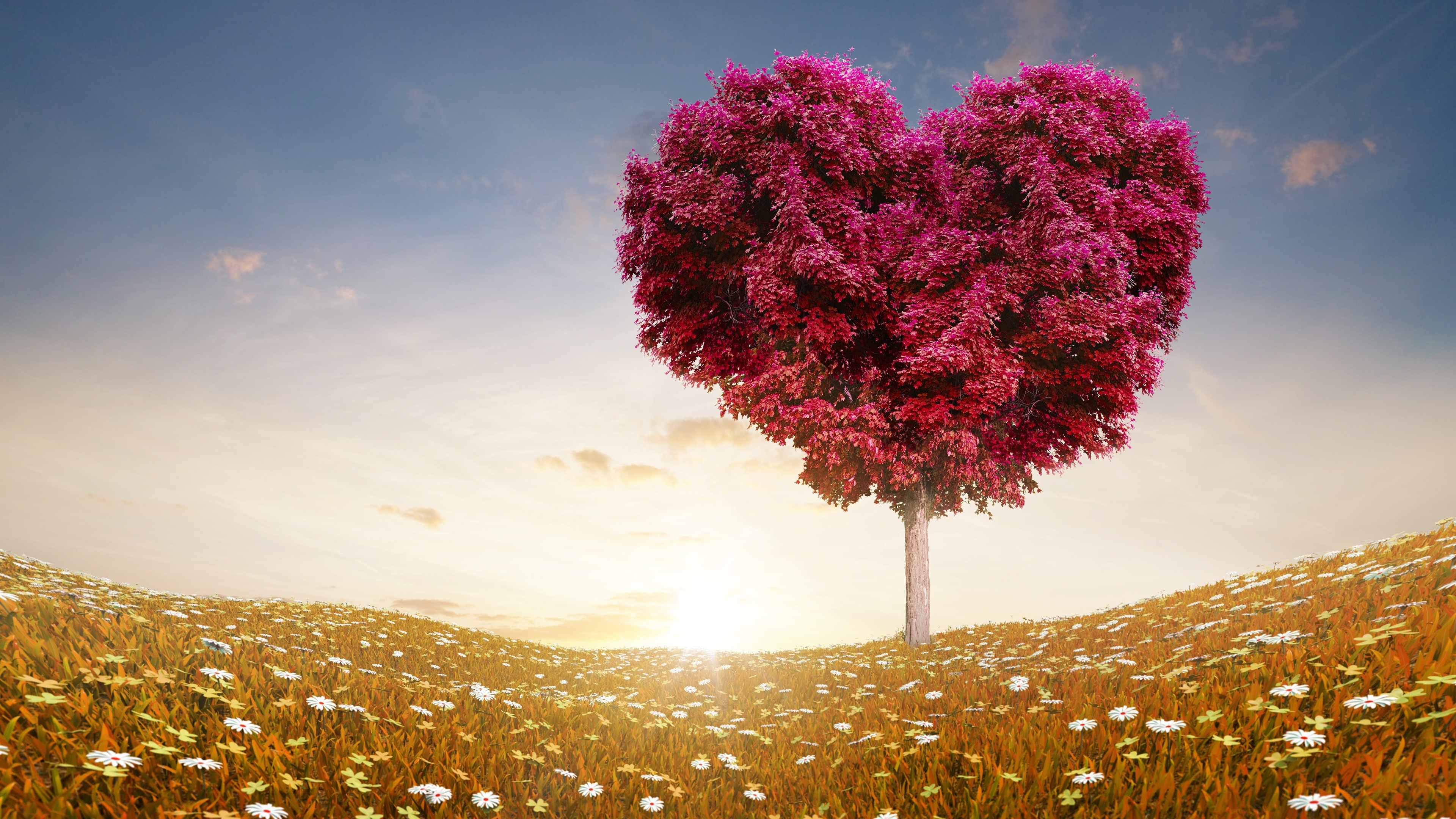 love heart tree fields wallpapers in jpg format for free